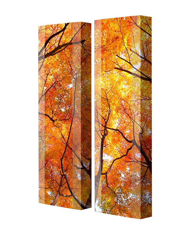 Schuhschrank FLASH Motivschrank Duo FD111 Bäume weiß 2er Set