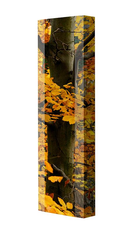 Schuhschrank FLASH Motivschrank Single F03 Baum weiß