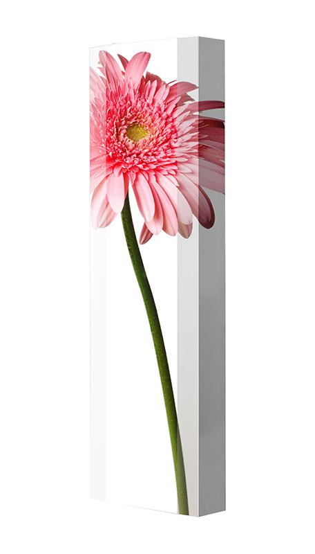 Schuhschrank FLASH Motivschrank Single F143 Blume weiß