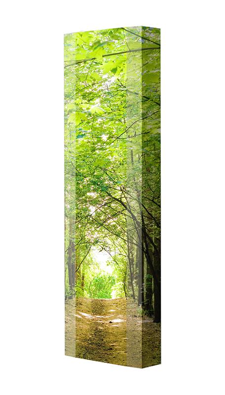 Schuhschrank FLASH Motivschrank Single F145 Wald weiß
