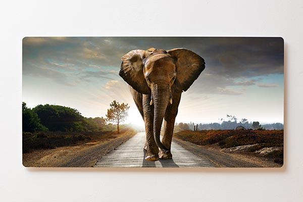 Magnettafel BACKLIGHT 120x60cm Motiv-Wandbild M04 Elefant