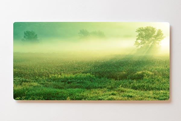 Magnettafel BACKLIGHT 120x60cm Motiv-Wandbild M05 Wiese Morgentau