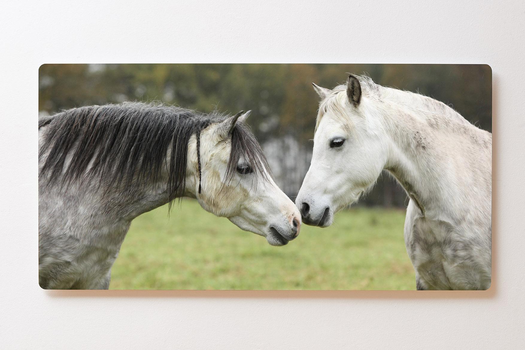 Magnettafel BACKLIGHT 120x60cm Motiv-Wandbild M101 Pferde