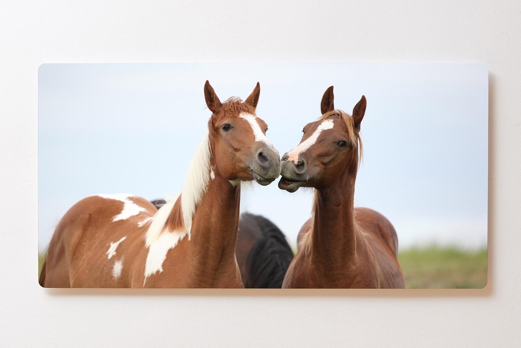 Magnettafel BACKLIGHT 120x60cm Motiv-Wandbild M102 Pferde