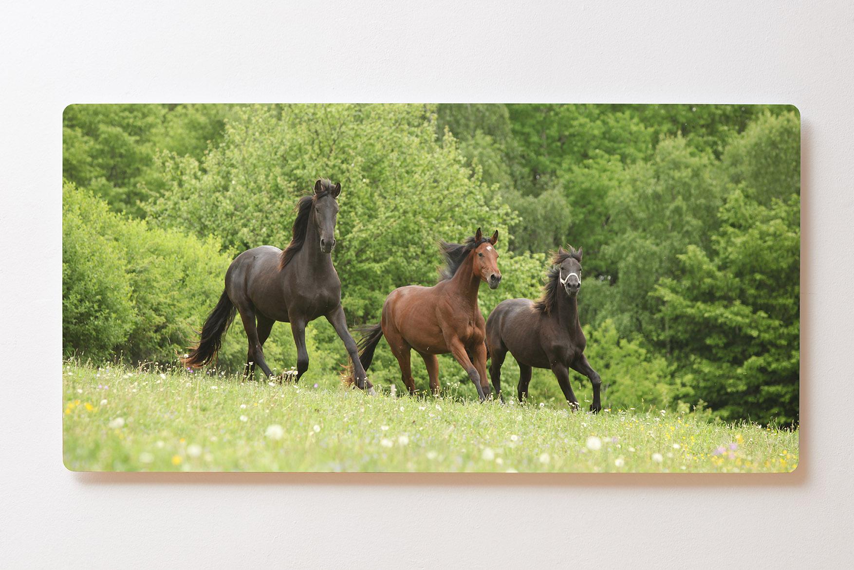 Magnettafel BACKLIGHT 120x60cm Motiv-Wandbild M103 Pferde