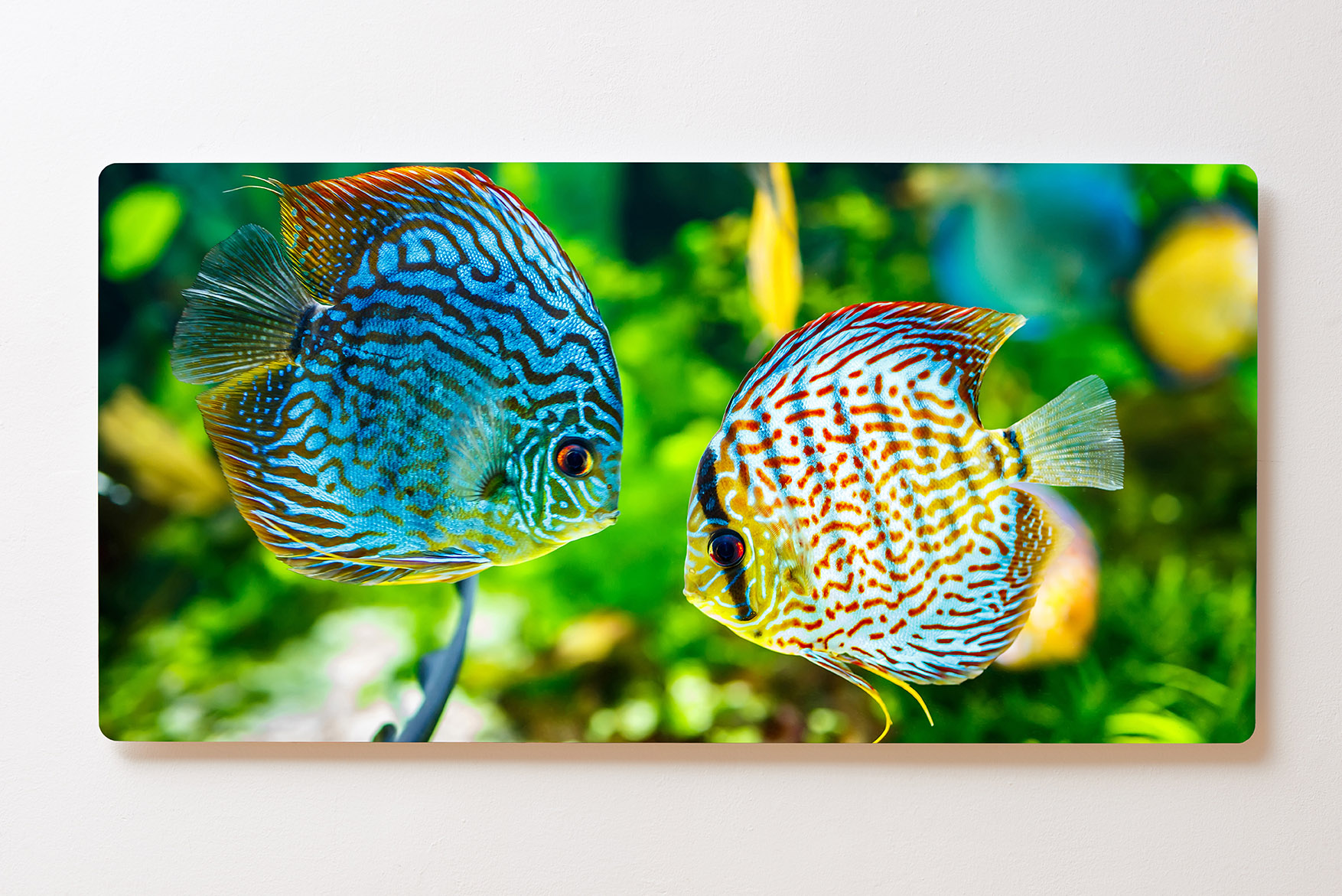 Magnettafel BACKLIGHT 120x60cm Motiv-Wandbild M105 Aquarium Diskus