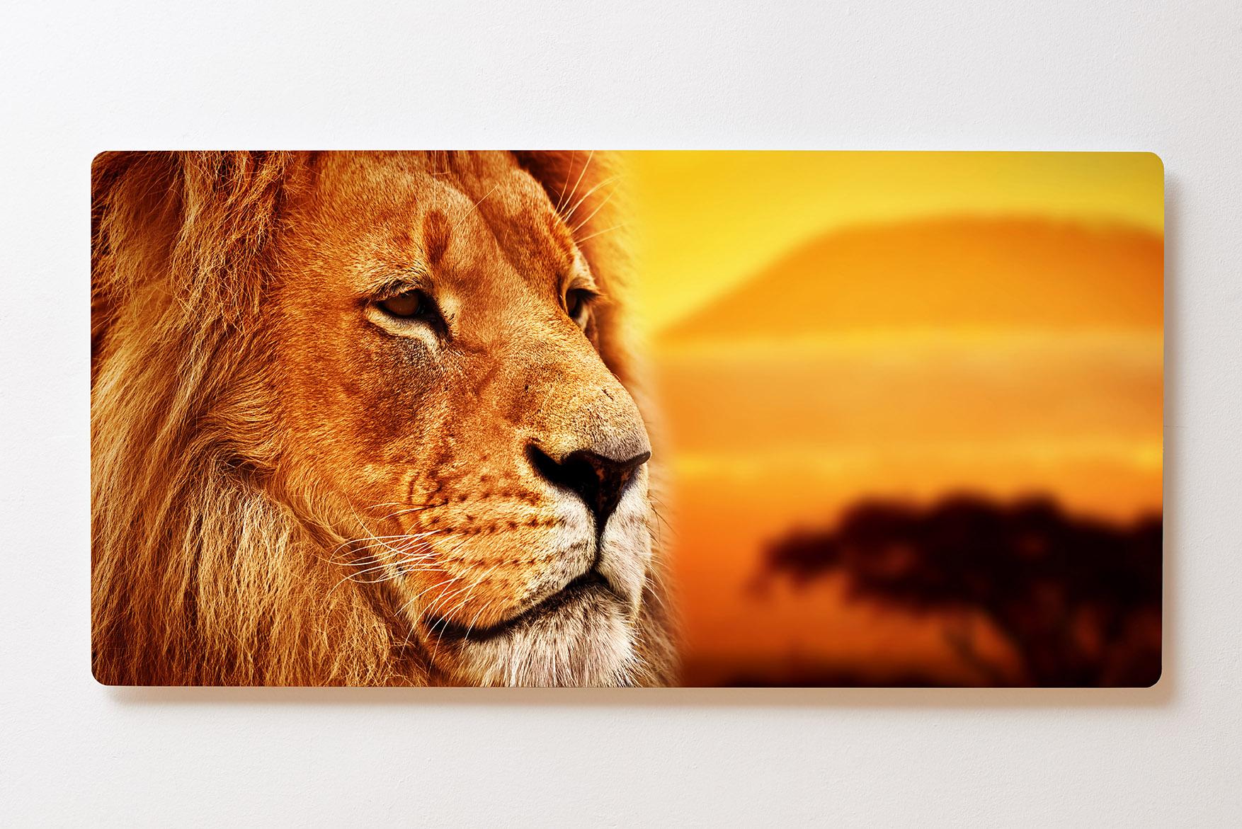 Magnettafel BACKLIGHT 120x60cm Motiv-Wandbild M107 Löwe Savanne