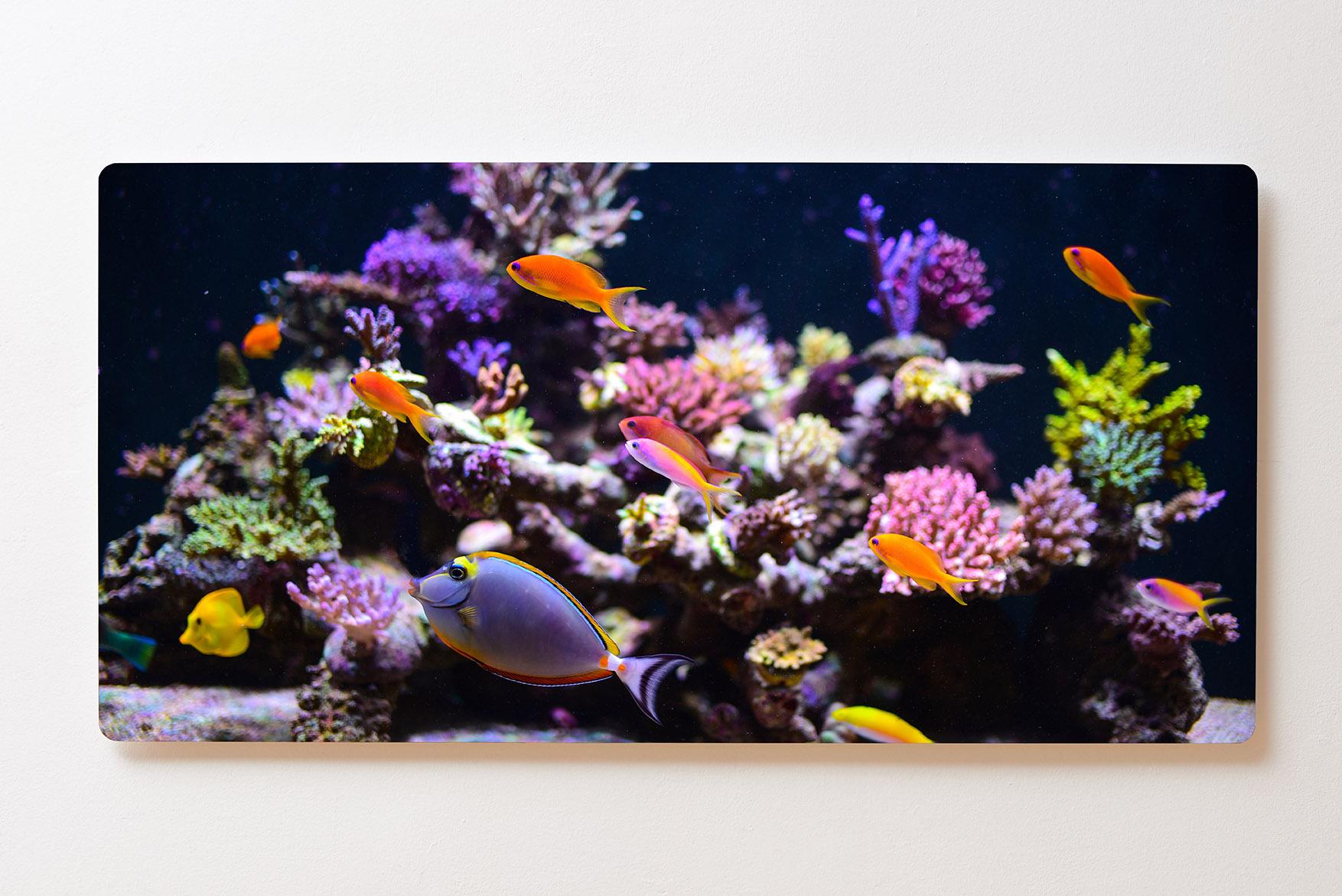 Magnettafel BACKLIGHT 120x60cm Motiv-Wandbild M135 Aquarium Fische