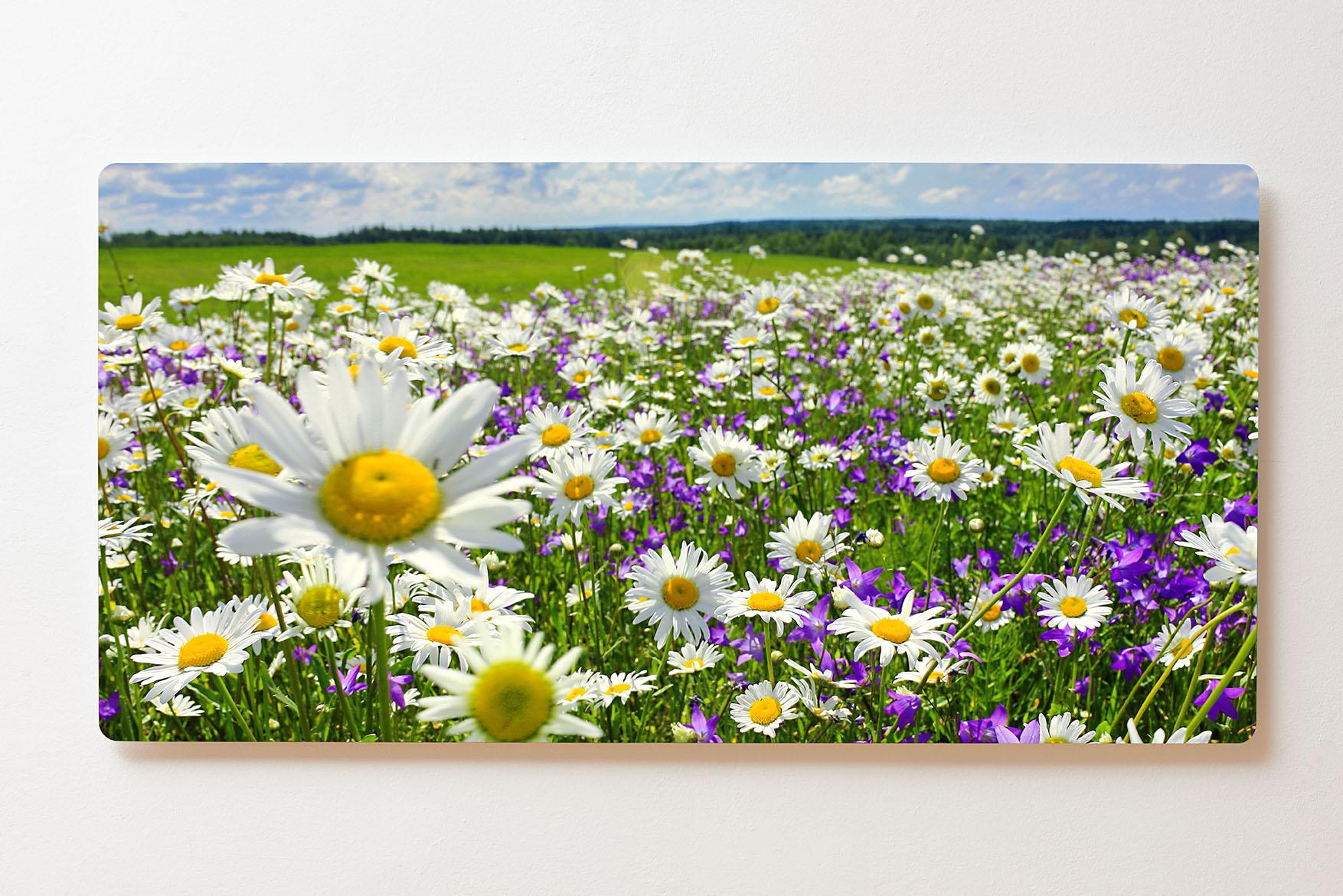 Magnettafel BACKLIGHT 120x60cm Motiv-Wandbild M156 Blumenwiese