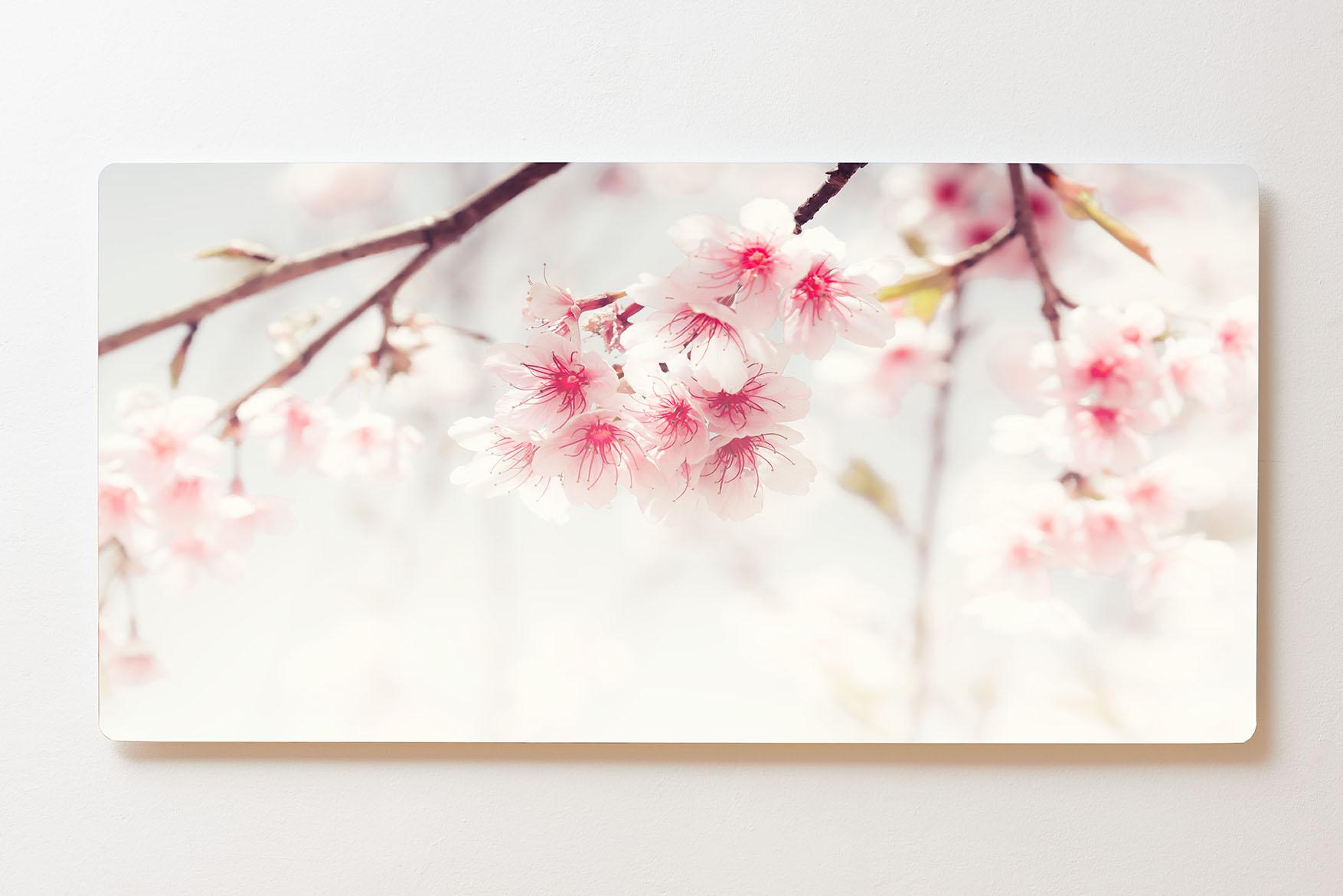 Magnettafel BACKLIGHT 120x60cm Motiv-Wandbild M159 Kirschblüte