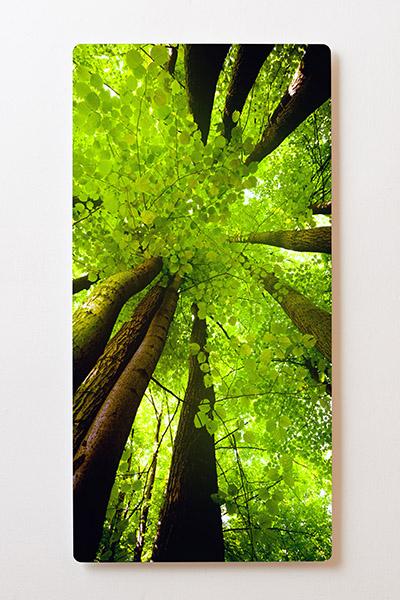Magnettafel BACKLIGHT 60x120cm Motiv-Wandbild M07 Bäume