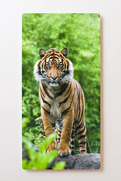 Magnettafel BACKLIGHT 60x120cm Motiv-Wandbild M12 Tiger
