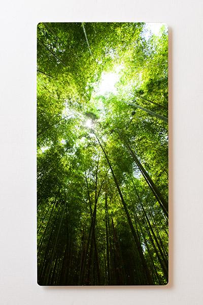 Magnettafel BACKLIGHT 60x120cm Motiv-Wandbild M37 Wald Bäume