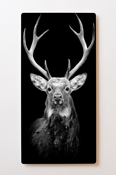 Magnettafel BACKLIGHT 60x120cm Motiv-Wandbild M49 Hirsch