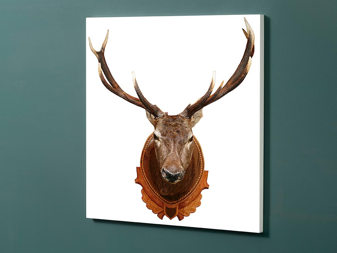 Magnettafel NOTIZ 60x60cm Motiv-Pinnwand M08 Hirsch
