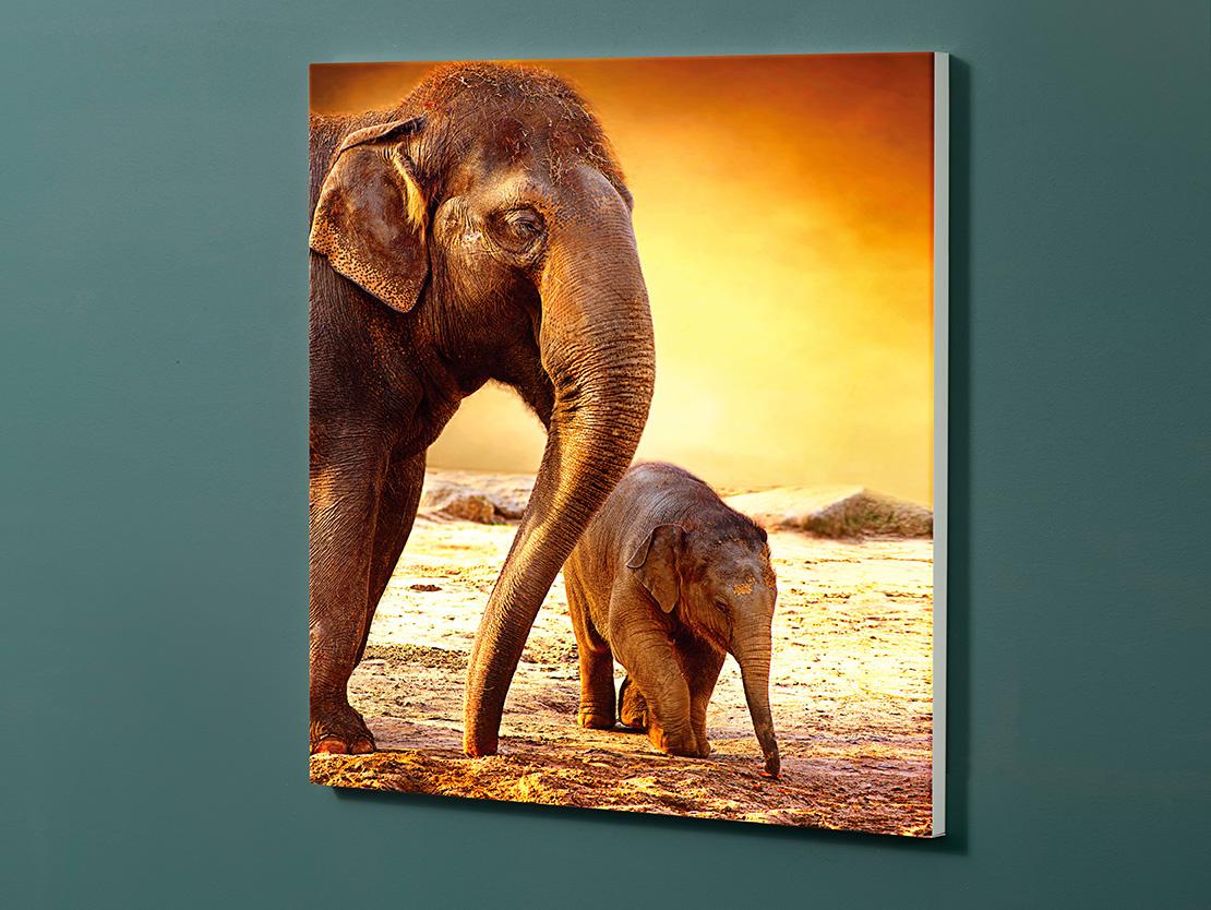 Magnettafel NOTIZ 60x60cm Motiv-Pinnwand M103 Elefant