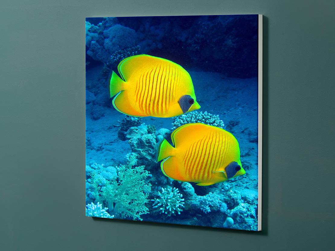 Magnettafel NOTIZ 60x60cm Motiv-Pinnwand M14 Fische
