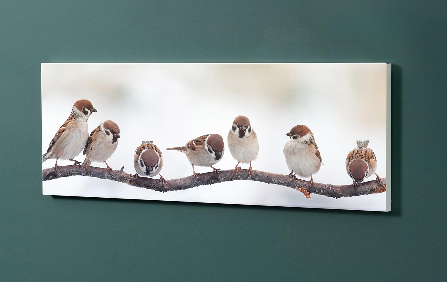Magnettafel NOTIZ 90x30cm Motiv-Pinnwand M135 Vögel