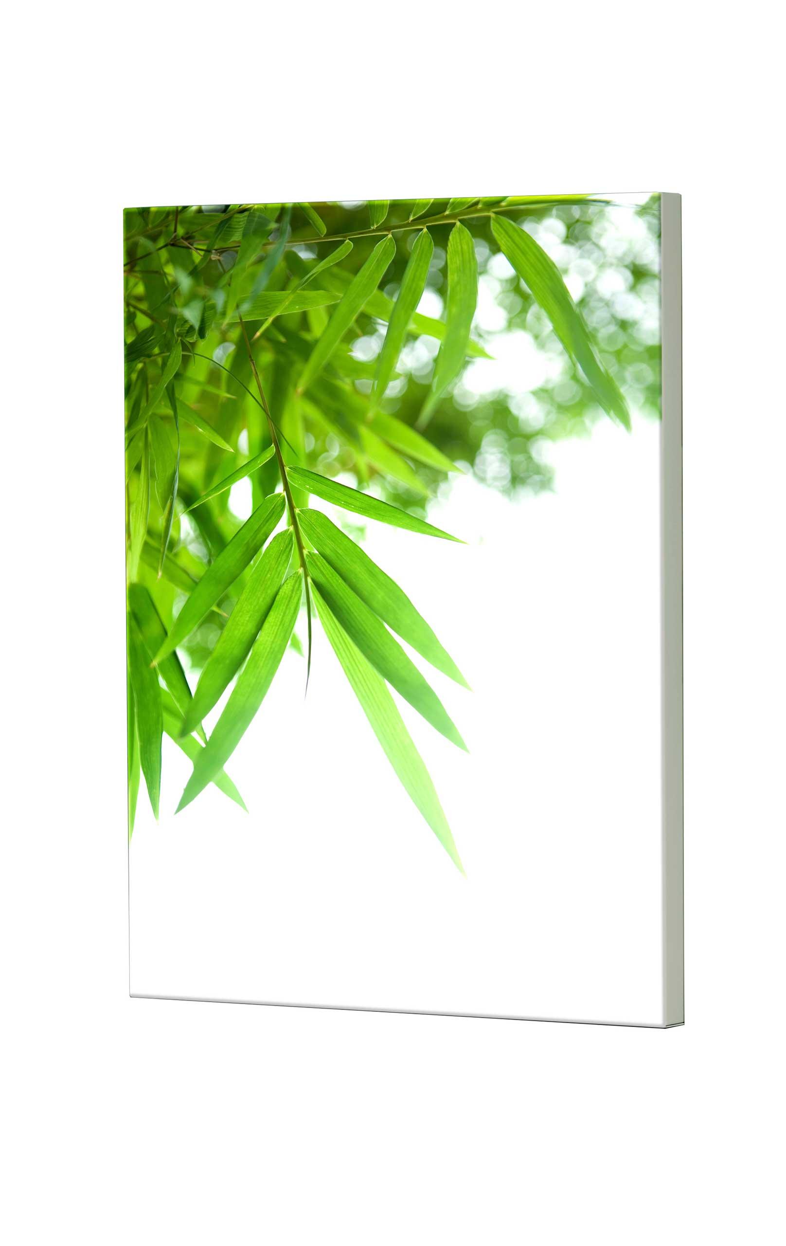 Magnettafel NOTIZ 60x80cm Motiv Blätter MDH103 Motiv-Pinnwand