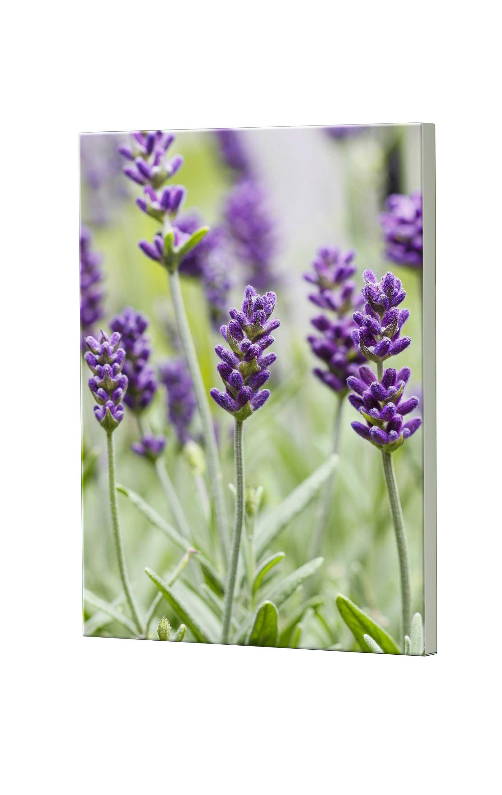 Magnettafel NOTIZ 60x80cm Motiv Blumen MDH149 Motiv-Pinnwand