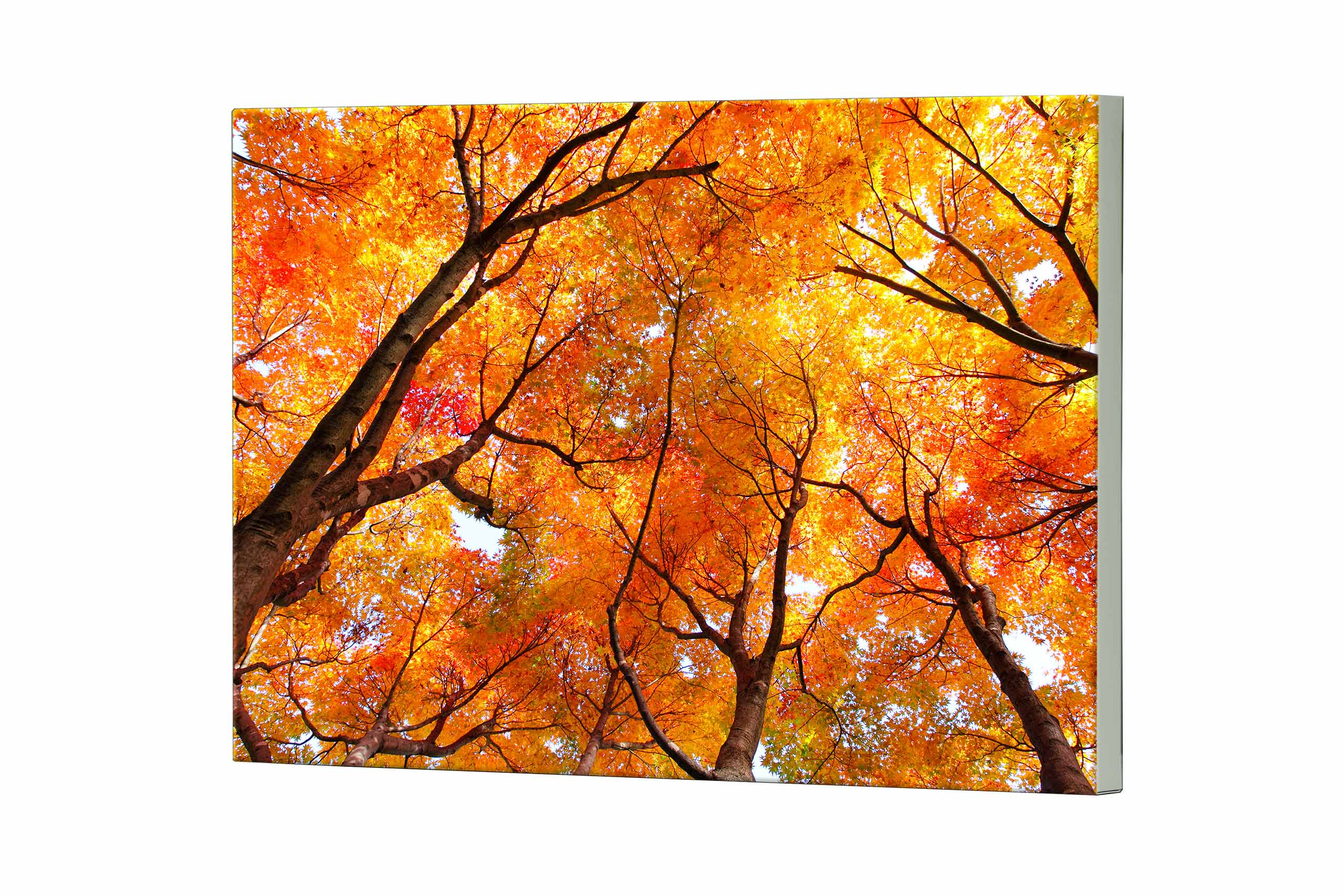 Magnettafel NOTIZ 80x60cm Motiv Bäume MDQ237 Motiv-Pinnwand