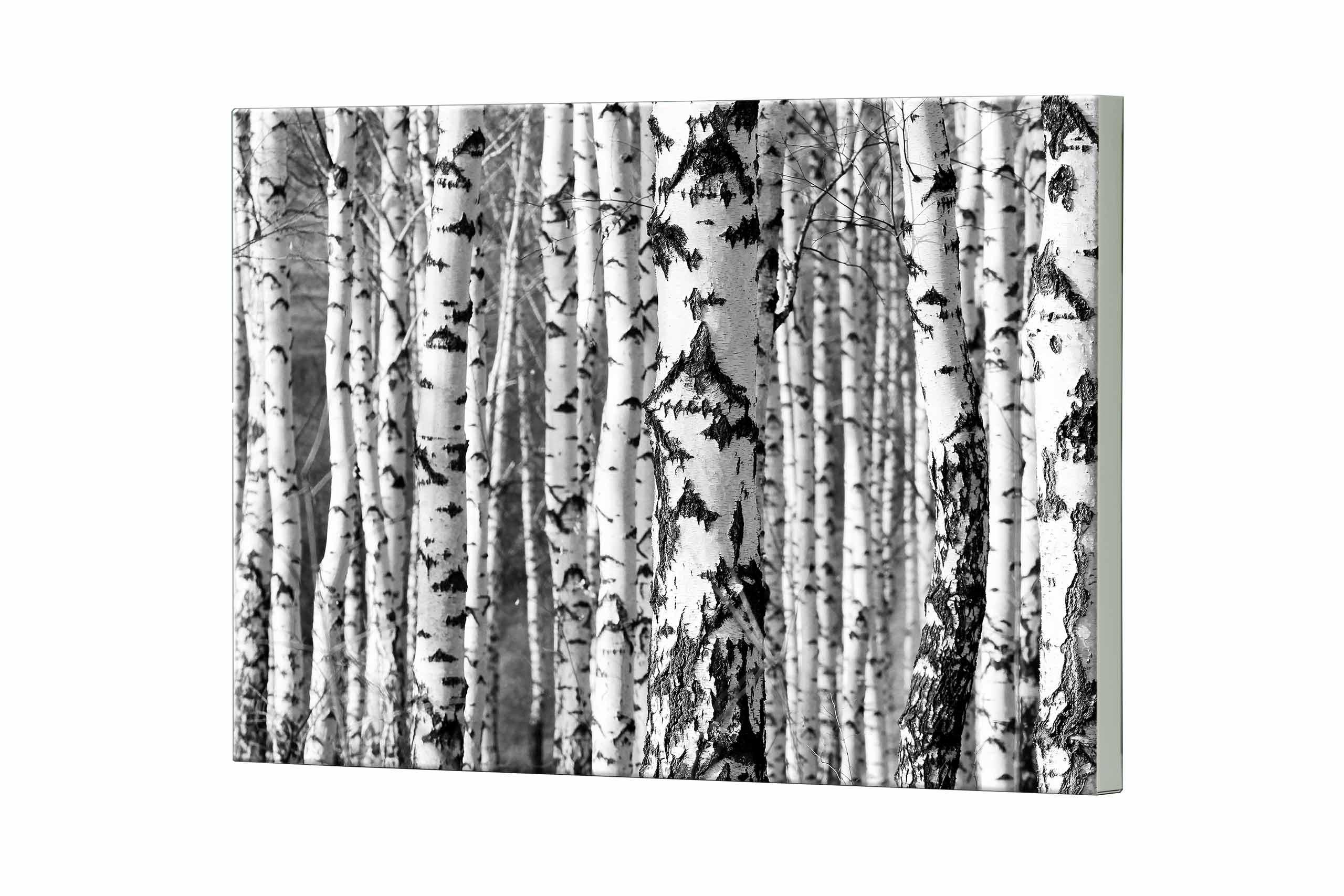 Magnettafel NOTIZ 80x60cm Motiv Birkenwald MDQ300 Motiv-Pinnwand