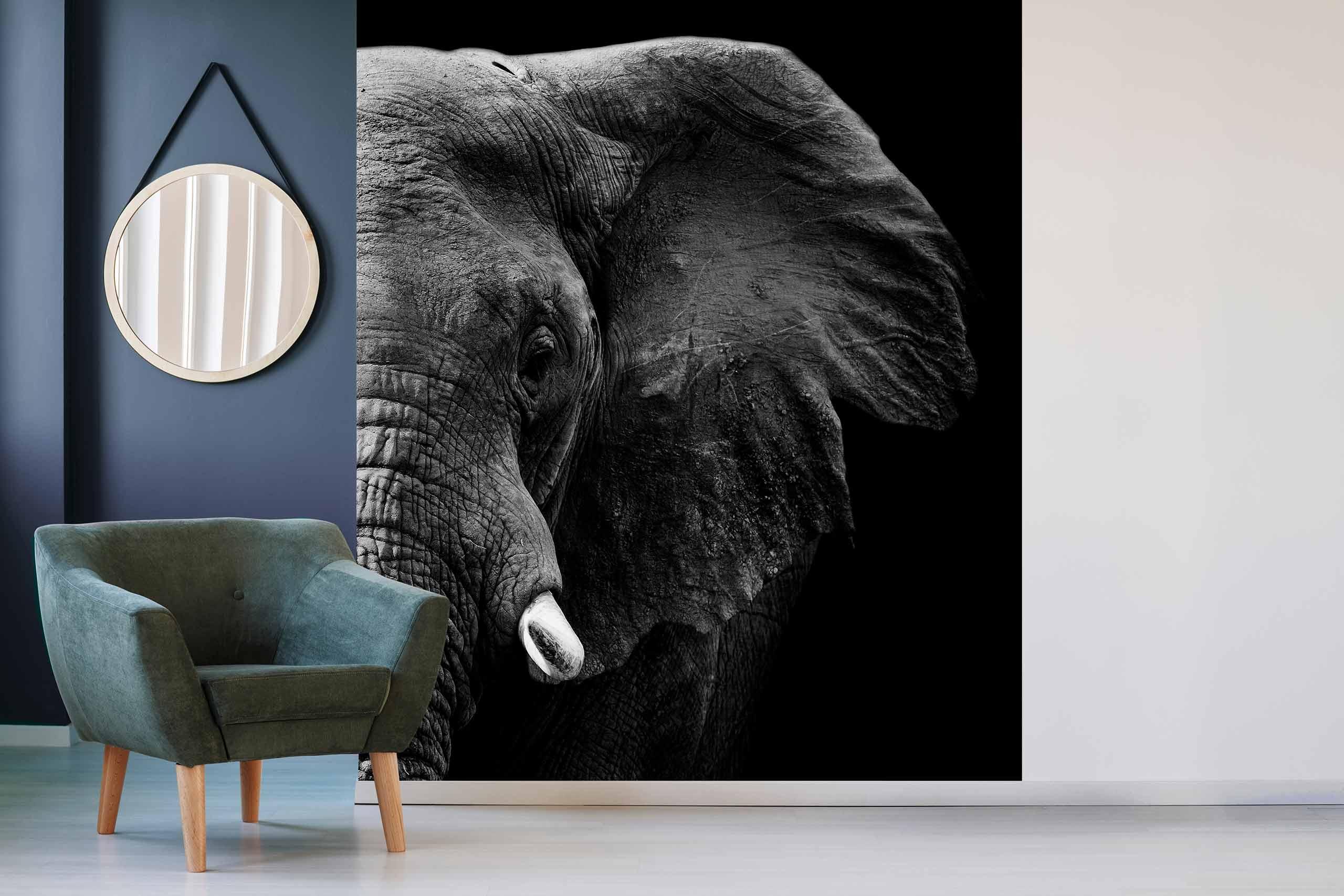 Vlies Tapete 225 Fototapete Höhe 250cm Motiv 104 Elefant Schwarz-Weiß