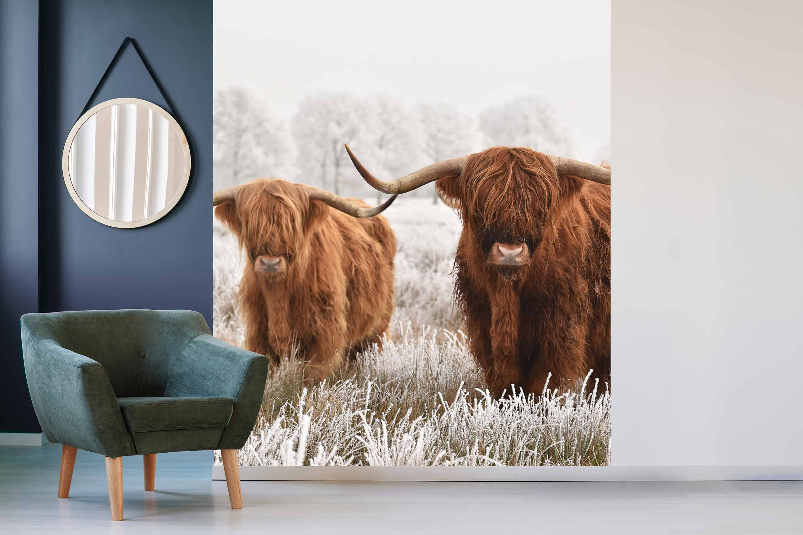 Vlies Tapete 225 Fototapete Höhe 250cm Motiv 152 Highland Cows